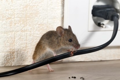 Pest Control in Fulham, SW6. Call Now! 020 8166 9746
