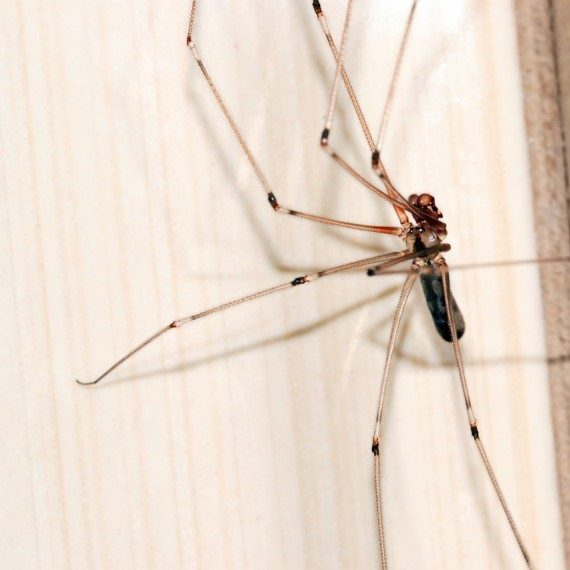 Spiders, Pest Control in Fulham, SW6. Call Now! 020 8166 9746